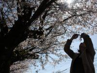 「第3回九十九里桜フォトコンテストin宮島親水公園」開催!