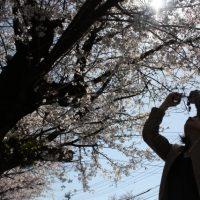 「第1回九十九里桜フォトコンテストin宮島親水公園」開催!