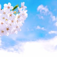 4月8日は九十九里桜フェスティバル!宮島池親水公園で楽しくお花見♪